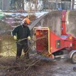 Træfældning, Beskæring samt andet træpleje